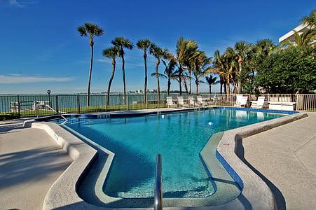 palm trees near swimming pool