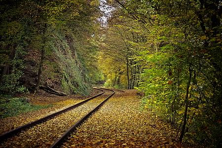brown trail rail near forest