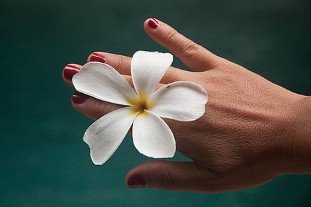 white plumeria on person's hand