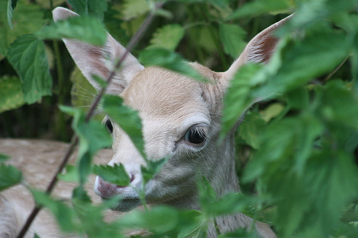 brown animal hiding on green plants