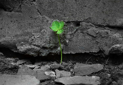 selective color photography of green leaf plant