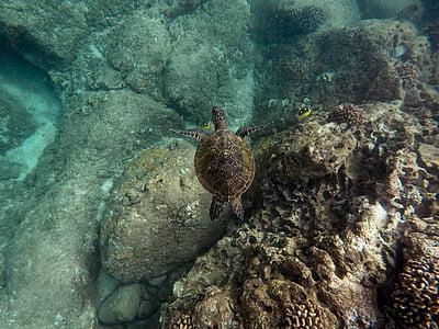 black turtle in body of water