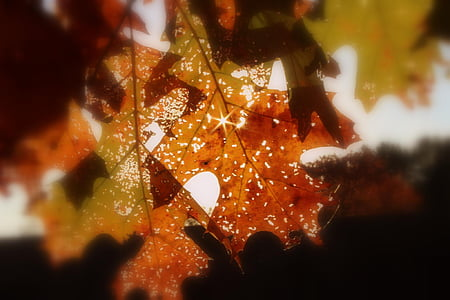 sun rays over brown leaves