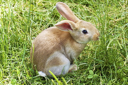 brown rabbit surrounded by green grass