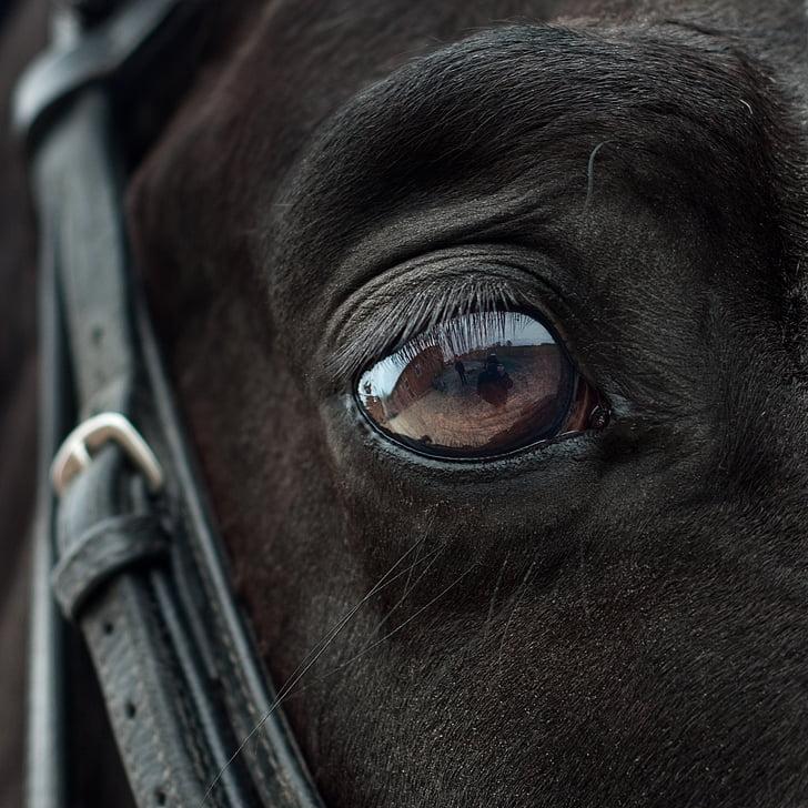 close-up photo of animal eye