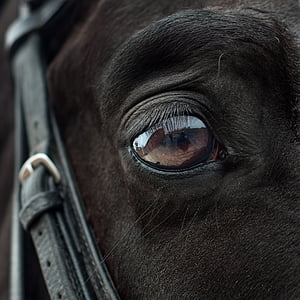 close-up photo of animal eye