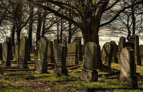 gray tomb stones under dead tree