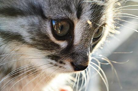 grey cat close up photo