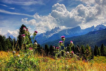 wild flowers on field photograph