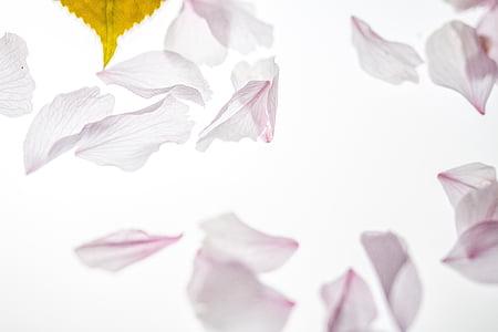 closeup photo of white petals