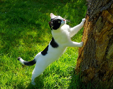 short-fur white and black cat on grass near tree trunk