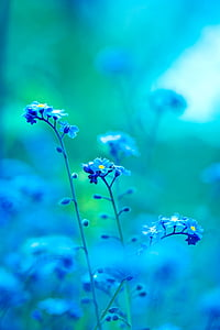 close up photo of blue clustered flower