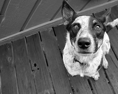 greyscale photography of dog