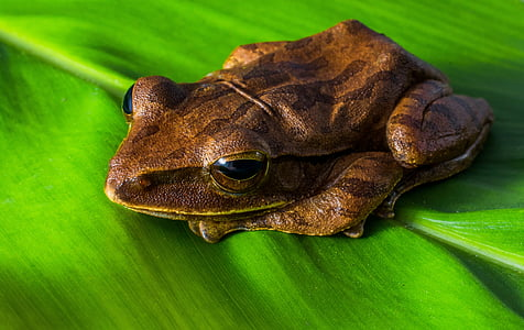brown frog on green leaf