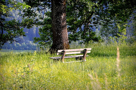 brown wooden bench surrounded with tall grasses near tree