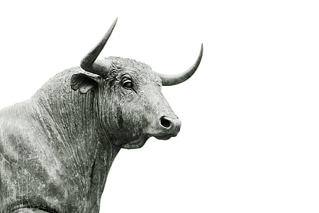 grayscale photo of cow