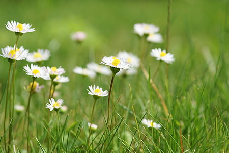 photography of white Daisy flowers