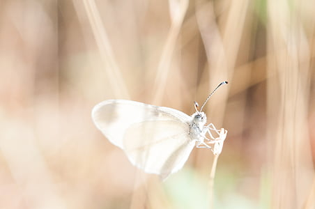 shallow focus photography of gray butterfly