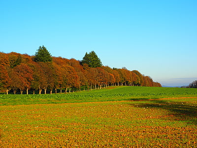 panorama photography of red and green trees under blue sky during daytime