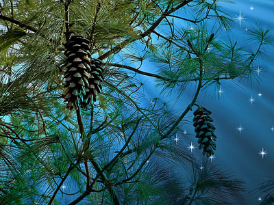 pine cones hanging on tree