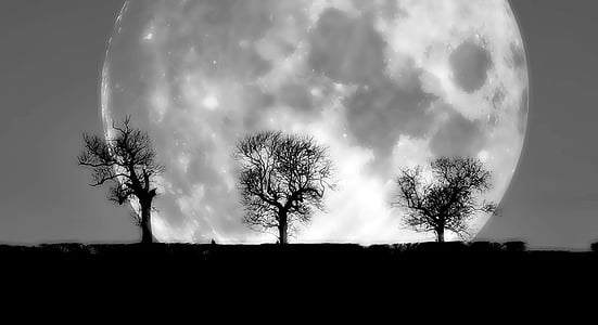 silhouette photography of three bare trees in front of moon