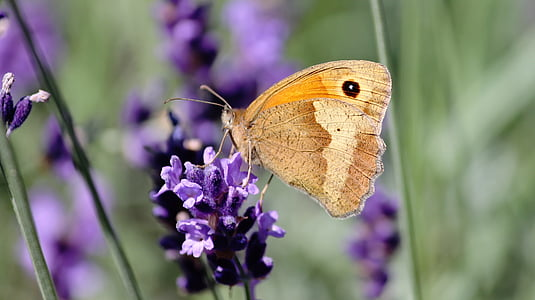 macro shot photography of brown butterfly and purple flower during daytime