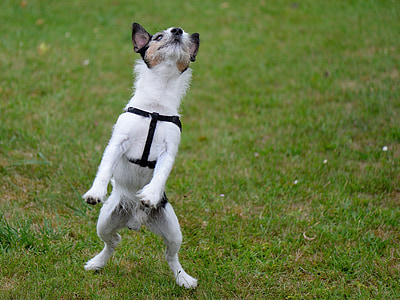 short-coated white dog standing on grass field during day time