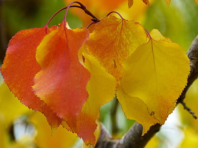 yellow and orange leaves