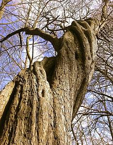 bare tree closeup photography