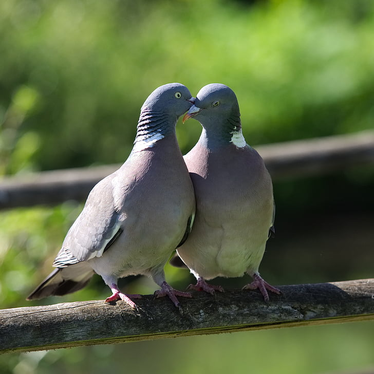 two gray pigeons during daytime