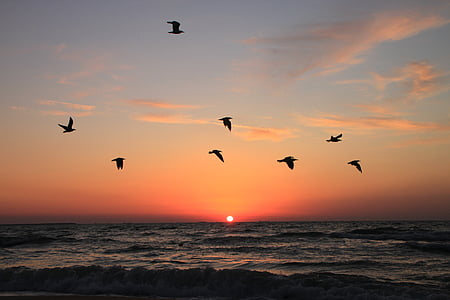 birds flying during sunset