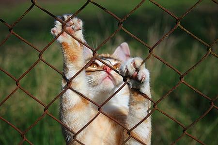 long-coated beige cat