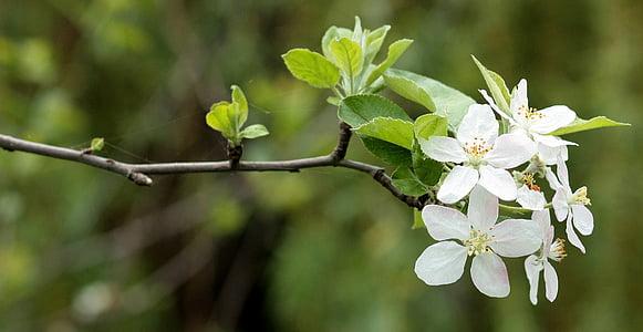 focus photography of white orange blossom flower