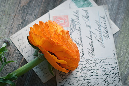 orange flower on greeting cards