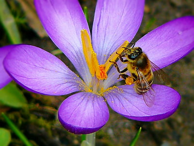 close up photo of honey bee perched on pink flower