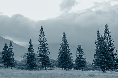 green pine trees under gray clouds