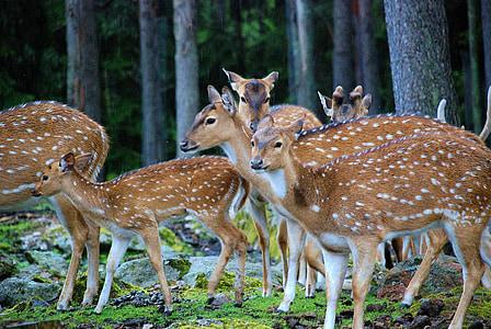 herd or brown deer beside trees