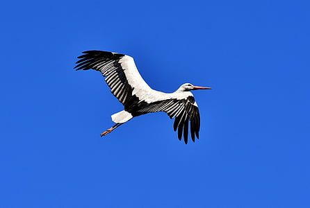 black and white bird flying during daytime