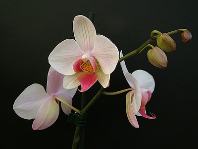 closeup photo of white orchid plant