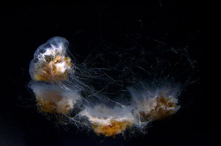 white-and-brown jellyfish