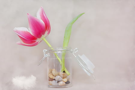white and pink petaled flower in glass canister jar