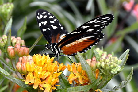 selective focus photo of a black and orange butterfly perched on yellow petaled flower