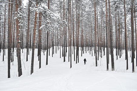 man walking on forest covered by snow