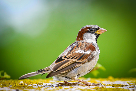 low-angle of house sparrow