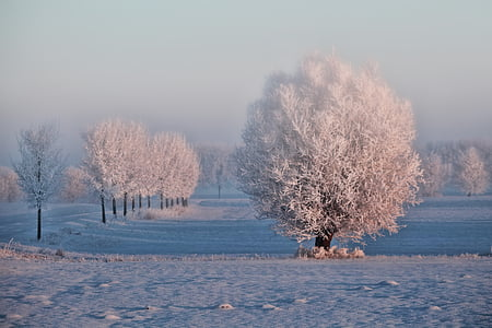 photo of snow coated trees on snow field