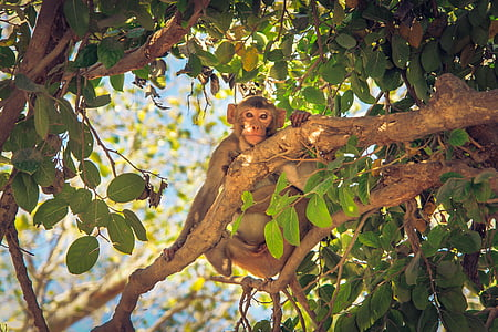 monkey on tree