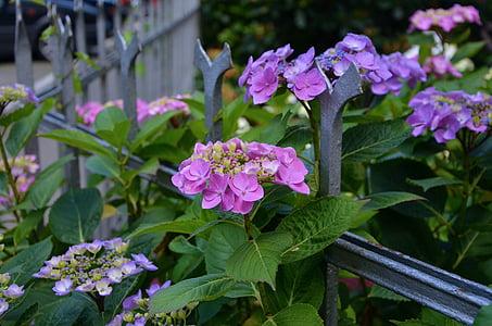 purple flowers near fence