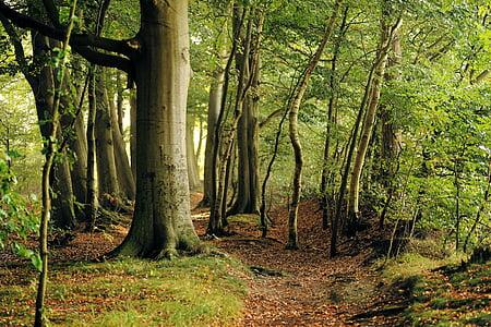 beige tree trunk during daytime