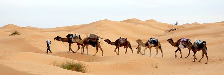 man walking on desert with camels
