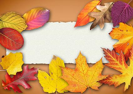assorted-color leaf illustration